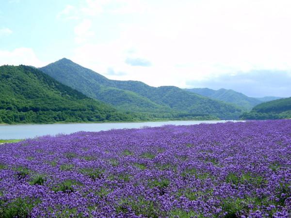 Best Spots in Japan