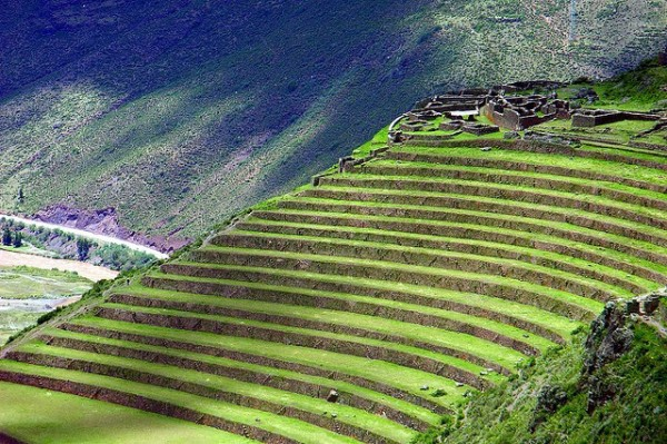Incredible Terrace Fields