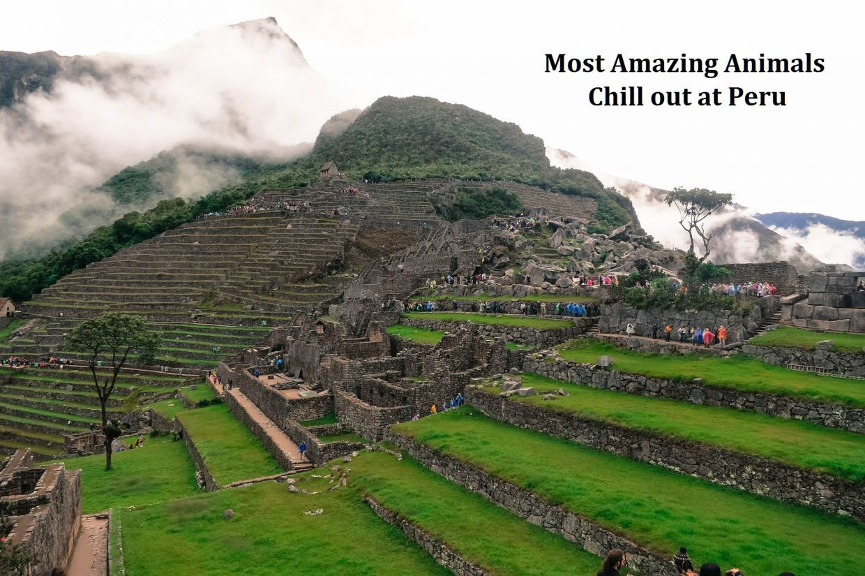 Most Amazing Animals – Chill out at Peru